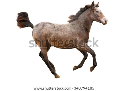 Isolated image of running young foal on white background.
