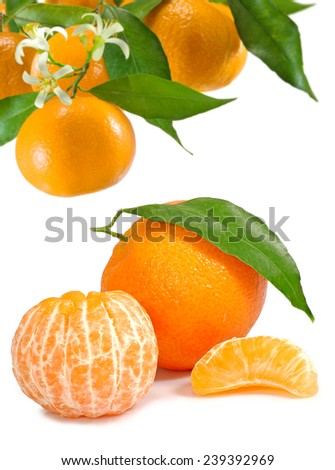 Isolated image of tangerines on a white background - stock photo