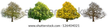 Isolated image of the same tree showing seasonal changes /  Four seasons isolated tree - stock photo