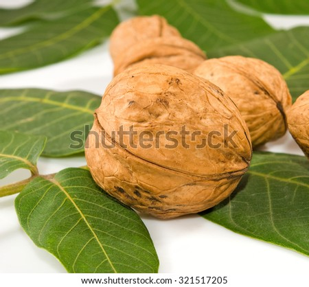 Isolated image of walnuts on a white background - stock photo