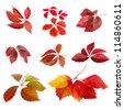 Isolated image set of autumn leaves - stock photo