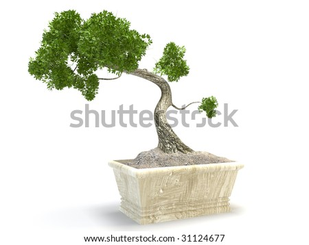 isolated japan bonsai tree on white background - stock photo