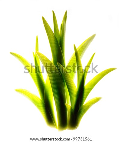 isolated juicy grass
