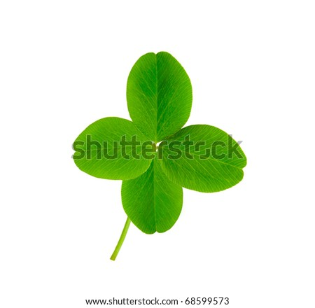 isolated leaf of clover with four petals - stock photo