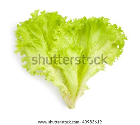 isolated leaf of salad - stock photo