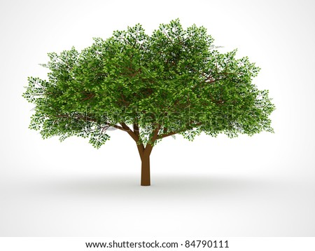 ISOLATED LEAFY TREE