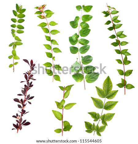 Isolated leaves branches bush set I - stock photo