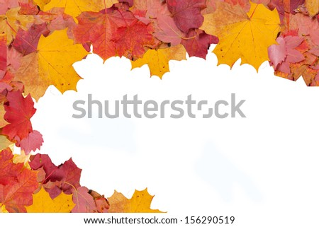 isolated leaves free text copy