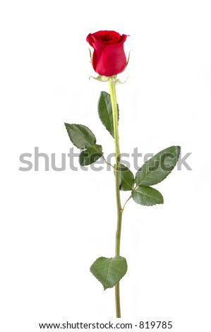 Isolated long stem red rose bud. Focus = front of rosebud. 12MP camera. - stock photo