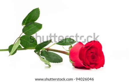 isolated long stem red rose laying down focused on the bud - stock photo