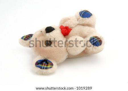 Isolated lying teddy bear - stock photo