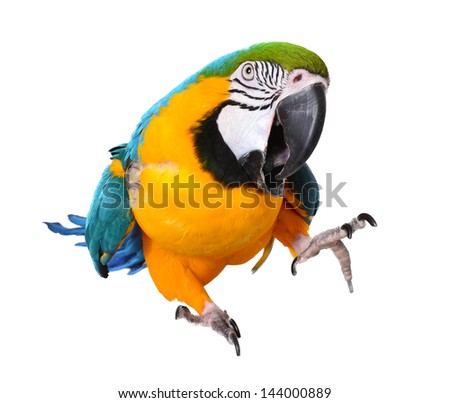Isolated Macaw on a white background - stock photo