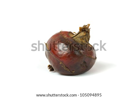 Isolated macro image of water chestnut with clipping path - stock photo