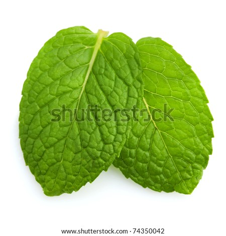 Isolated macro of fresh mint leaves. - stock photo