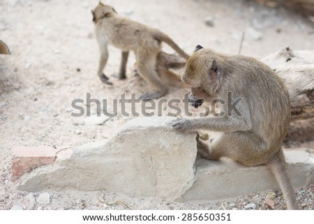 Isolated monkey family is sitting on the rock - stock photo