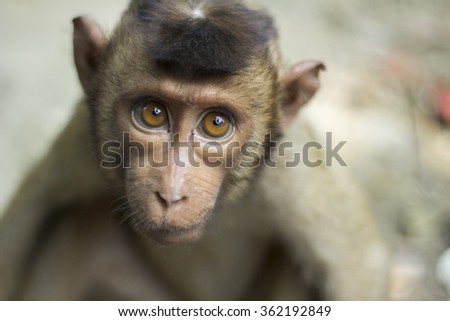 Isolated monkey look straight with big eyes - stock photo