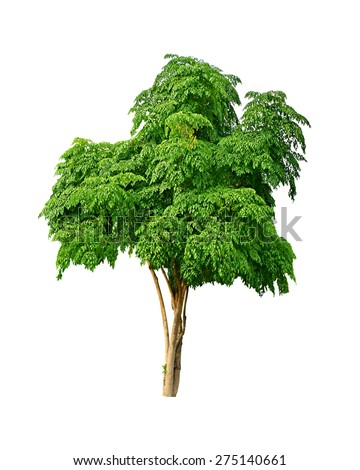 isolated neem tree on a white background (Die cutting) - stock photo