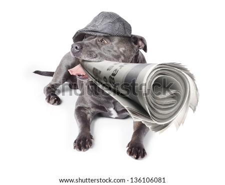 Isolated newspaper dog wearing vintage flat cap while carrying latest print edition of the local news. White background - stock photo