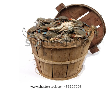 isolated  on a white background photo of a bushel basket of live blue crabs from the Chesapeake Bay of Maryland - stock photo