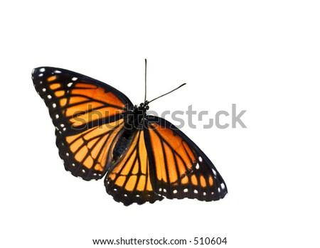 isolated on white background orange butterfly - stock photo