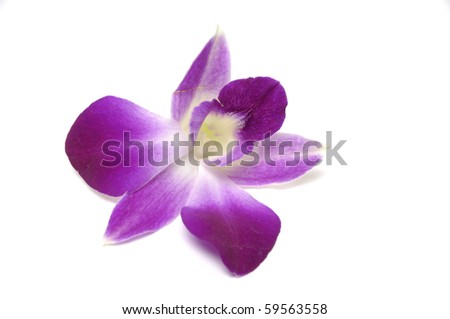 Isolated orchid flower - stock photo
