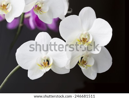 Isolated orchid on black - stock photo