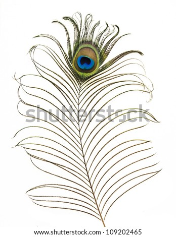 isolated peacock feather on white - stock photo