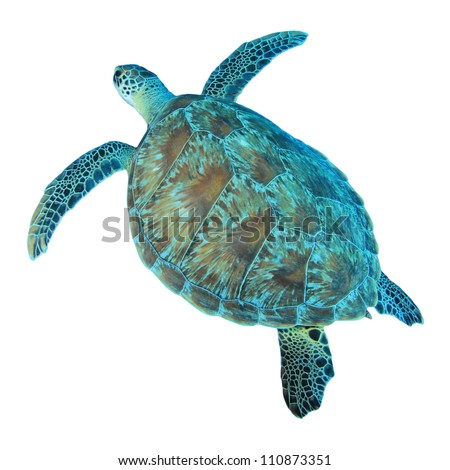 Isolated photo of Green Sea Turtle from above - stock photo