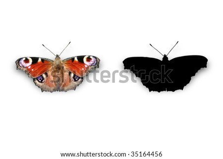 Isolated picture of a butterfly + a silhouette - stock photo