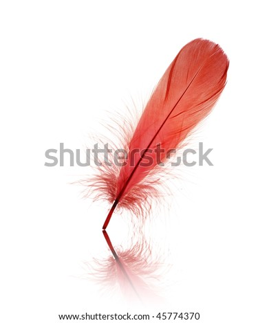 Isolated red bird feather on white