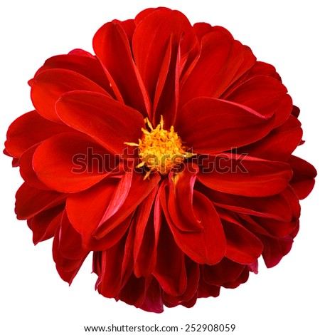 Isolated Red Flower - stock photo