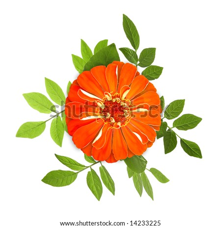 isolated red flower with green leaves - stock photo