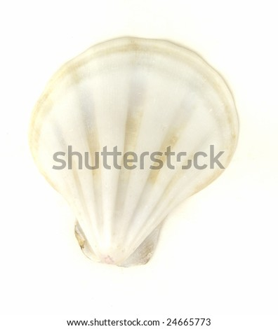 isolated sea shell