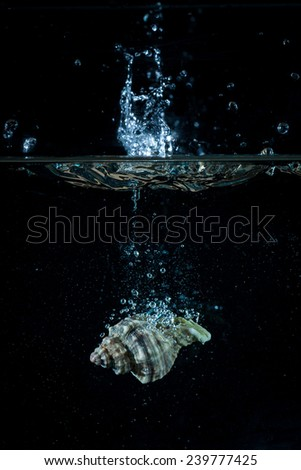 Isolated seashell fall in water with blue splash and black background