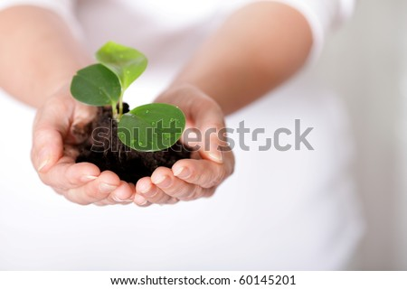 Isolated shot of a fresh shoot, growing from a small pile of earth held in hands. - stock photo