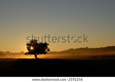 Isolated silhouette tree at sunrise in misty fog
