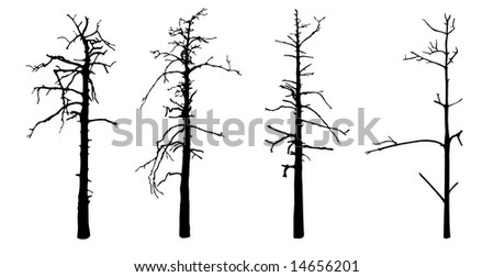 isolated silhouettes old tree on white background