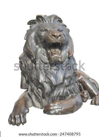 Isolated sitting lion on white background - stock photo
