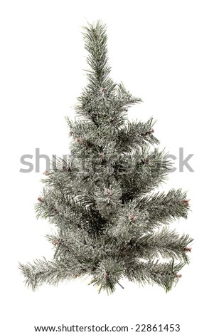 Isolated small fir tree under snow