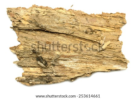 isolated  stub log bark with wooden texture - stock photo