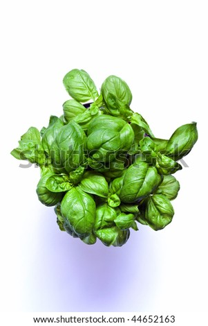 isolated top view on basil - stock photo