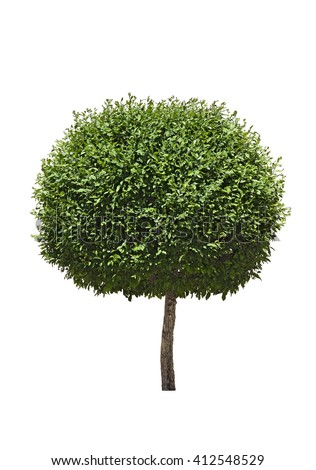 Isolated topiary tree