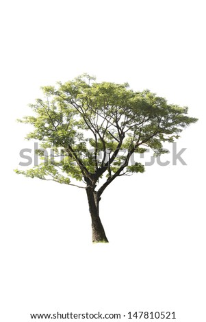 isolated tree - stock photo