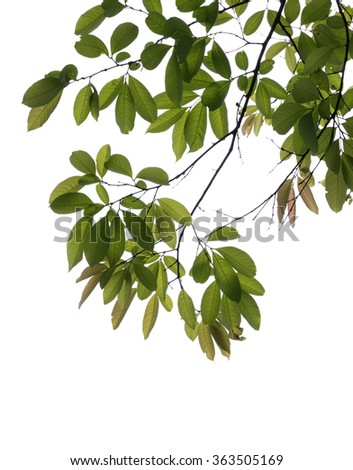 isolated tree branch