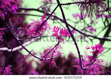 isolated tree branches and pink foliage leaf with  sky - stock photo