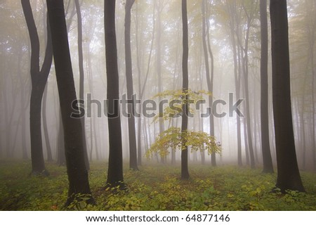 isolated tree in a misty forest at autumn