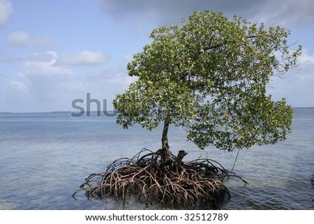 Isolated tree in Bocas del Toro - stock photo