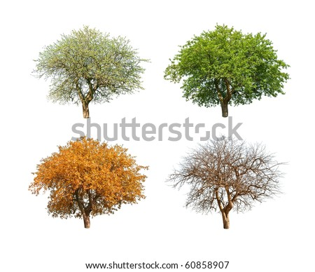 isolated tree in for season - stock photo