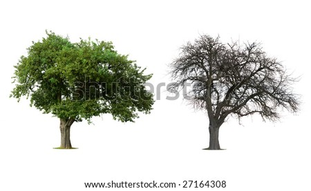 Isolated Tree in Winter and Summer - stock photo