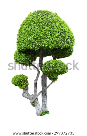 Isolated tree on a white background.This has clipping path.  - stock photo